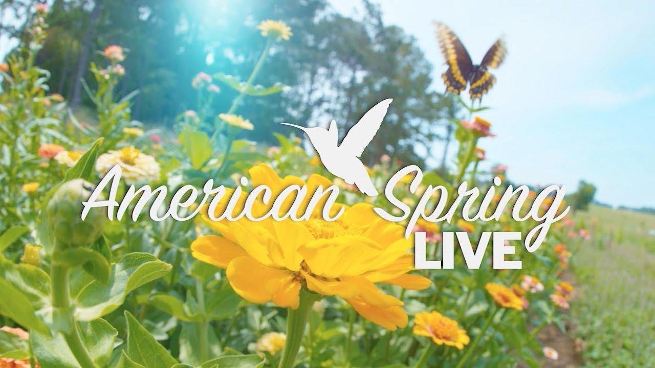 2839 American Spring LIVE Trailer