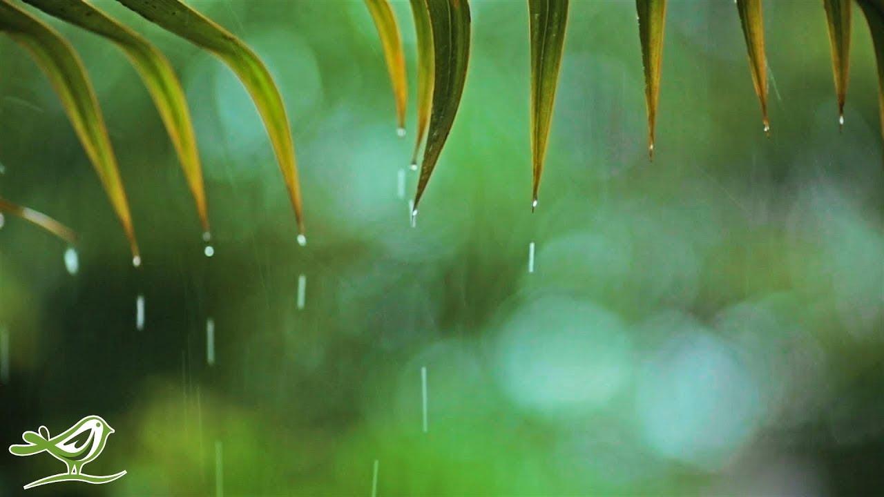33255 Relaxing Piano Music & Rain Sounds 24/7